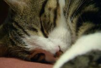 Kitties Delight Customers at London's First Cat Café