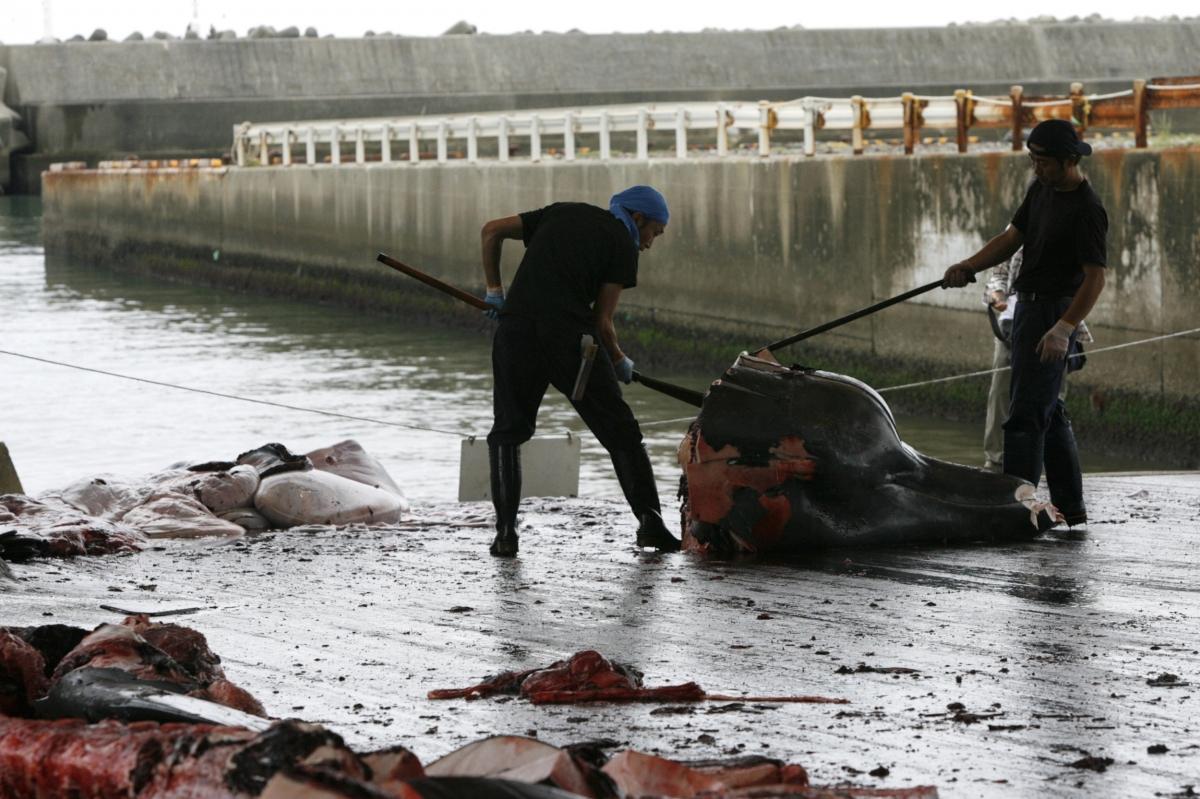 Japan Whaling Asia