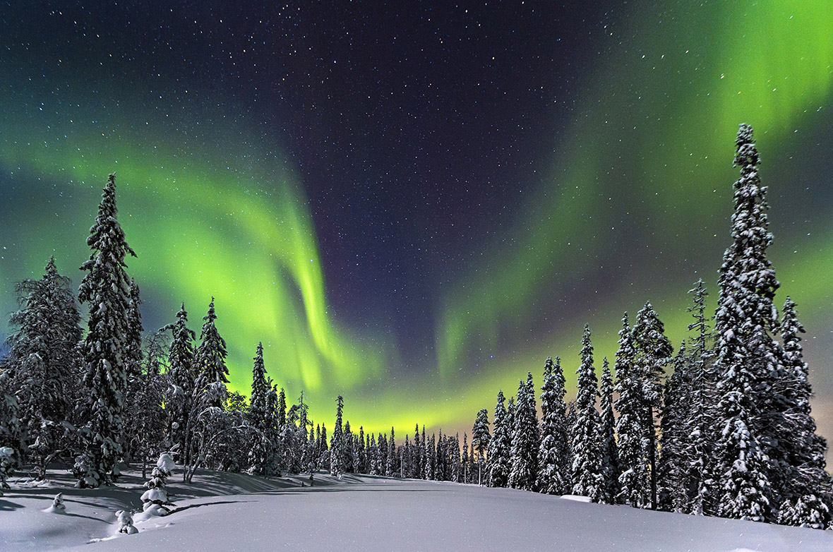 Aurora Borealis over a forest in the Pyhae Luosto National Park, Finland