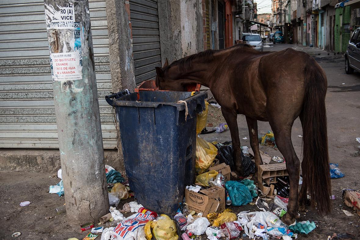 horse bin