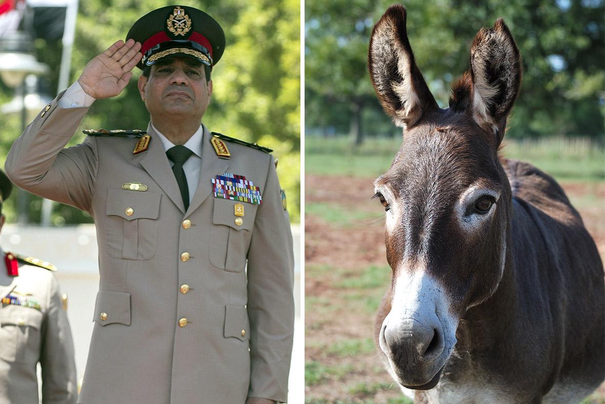 sisi donkey