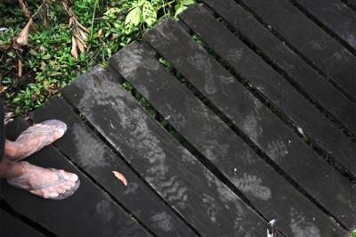 ashaninka govt footprints