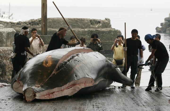 Whaling Japan Ban Meat