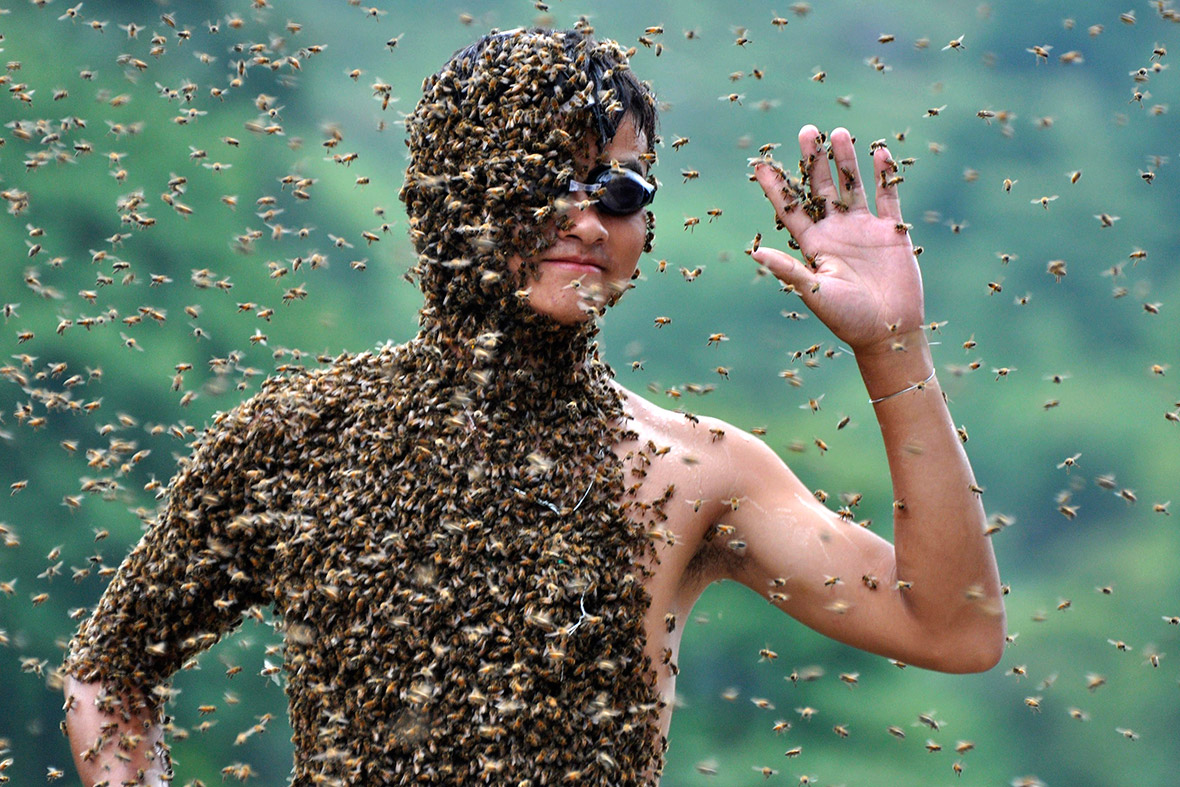 Image result for bees on face