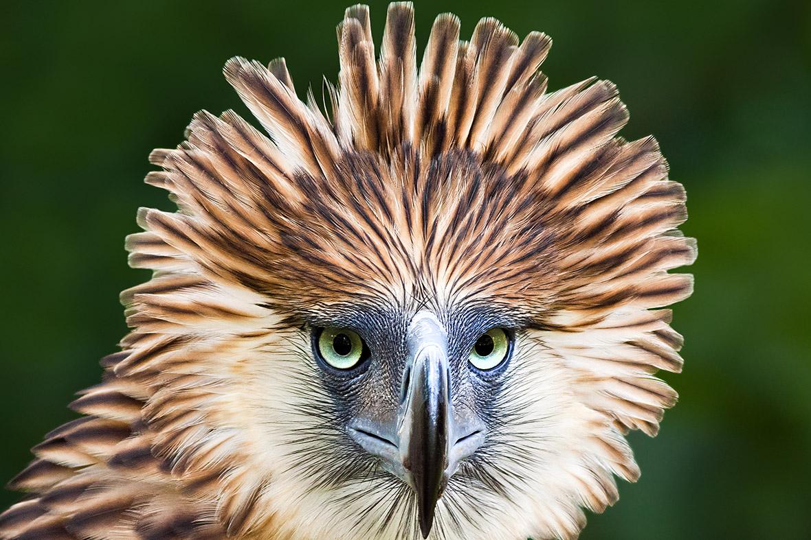 https://d.ibtimes.co.uk/en/full/1373390/endangered-birds.jpg