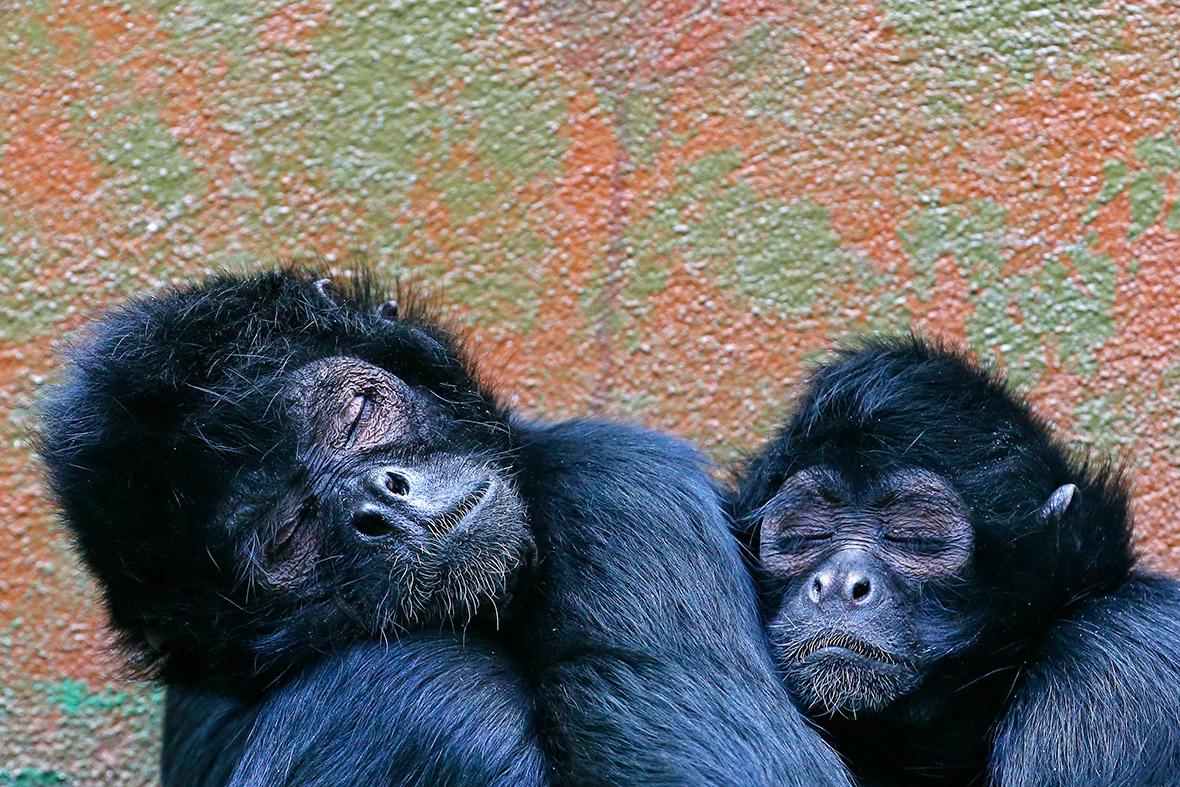 monkeys sleeping