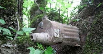 bomb in tree