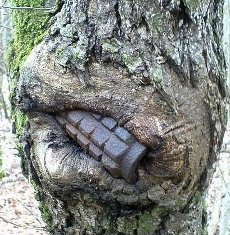 grenade in tree