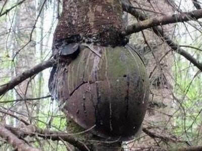 helmet in tree