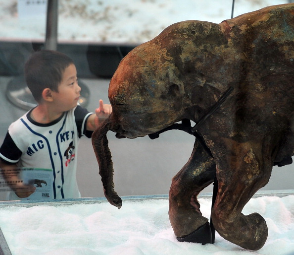 A child points to the carcass of the world's most well-preserved baby mammoth, displayed in a Hong Kong shopping mall