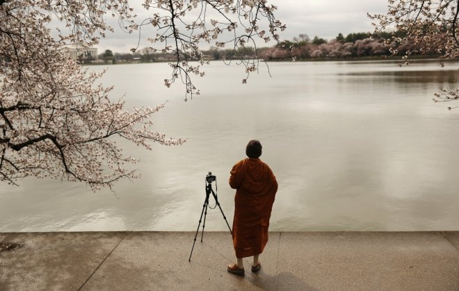 A Buddhist monk photographs emerging cherry blossom trees around the Tidal Basin in Washington.