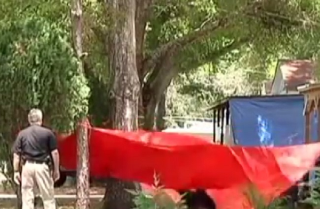 Black bear tears through safety sheet in Panama City, Florida