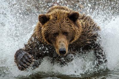 natural bear