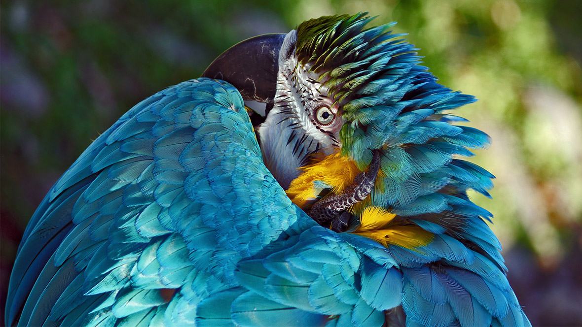 natural parrot