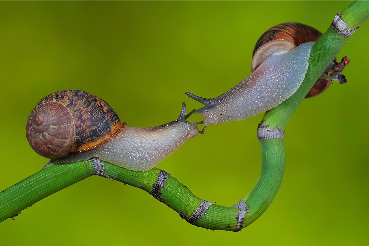 natural snails