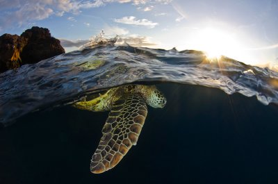 natural turtle