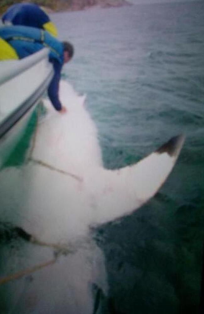 Lets talk about that sevenmetre great white shark in