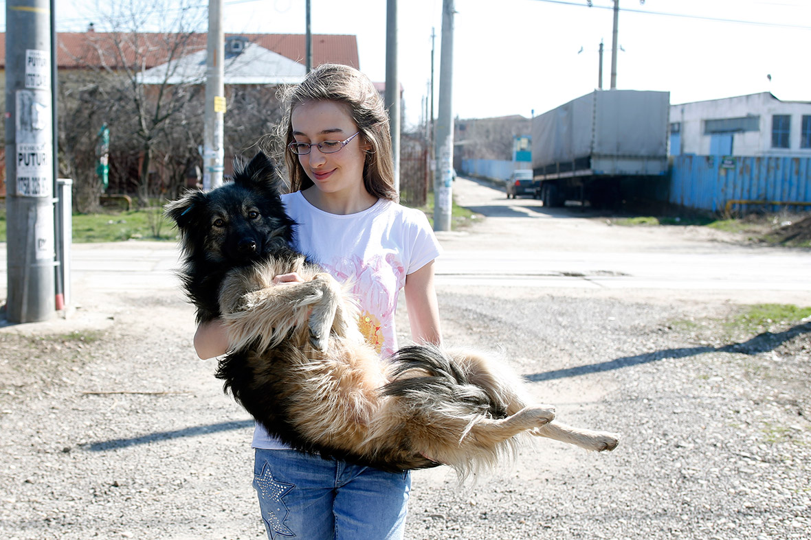 Ana dog