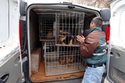 dogs van