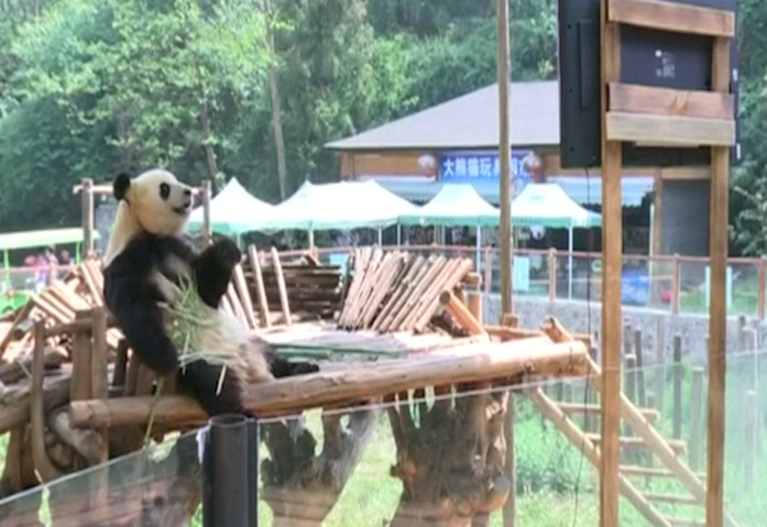 Zoo Installs TV for Lonely Panda