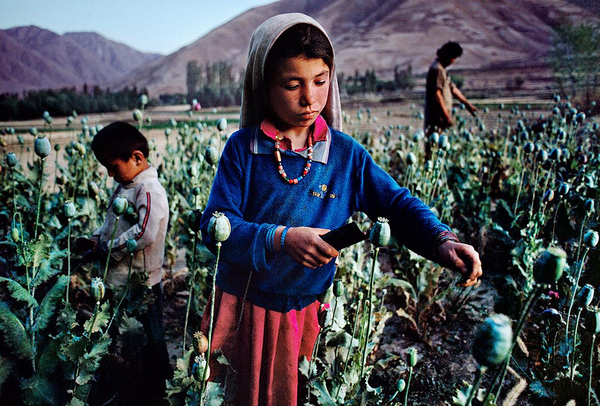 Children work in opium field in Badakhshan, 1992