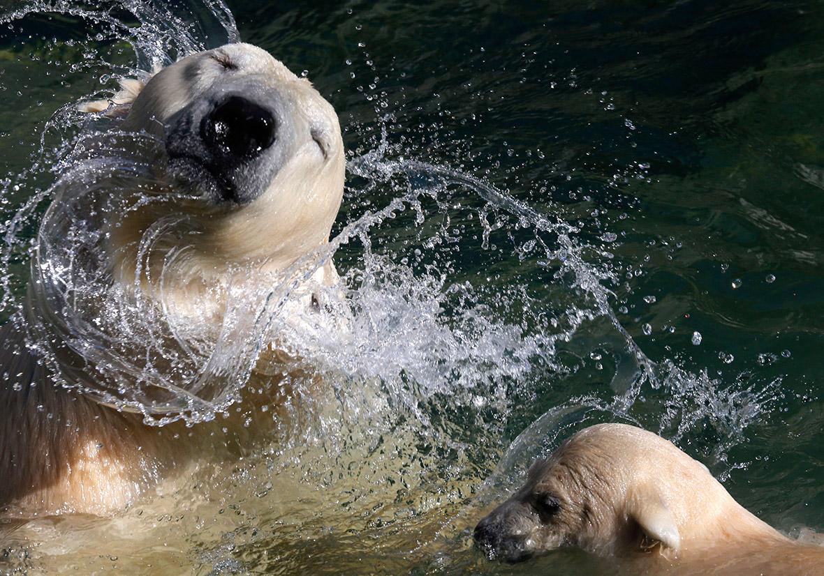 water bears
