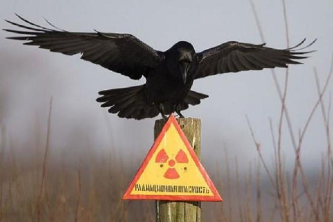 Chernobyl bird