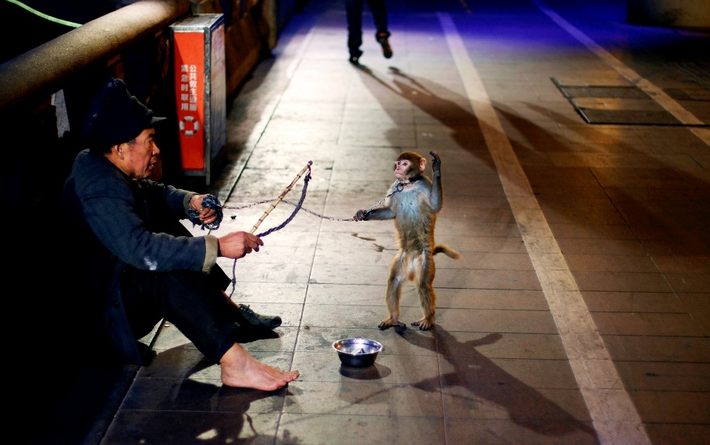 China Beggar Chained Monkey