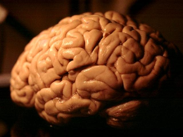 brain circuit board computer