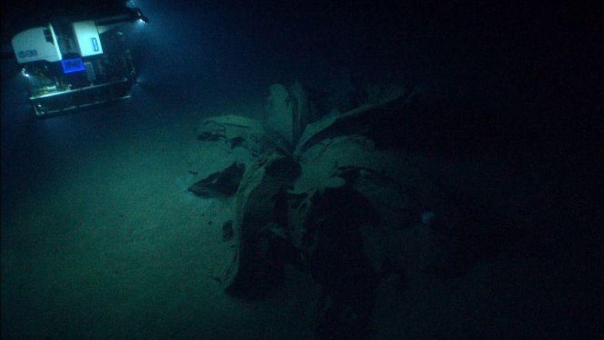 Gulf Of Mexico Shipwreck Explorers Discover Rare