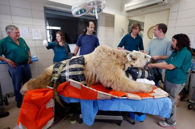 bear vet