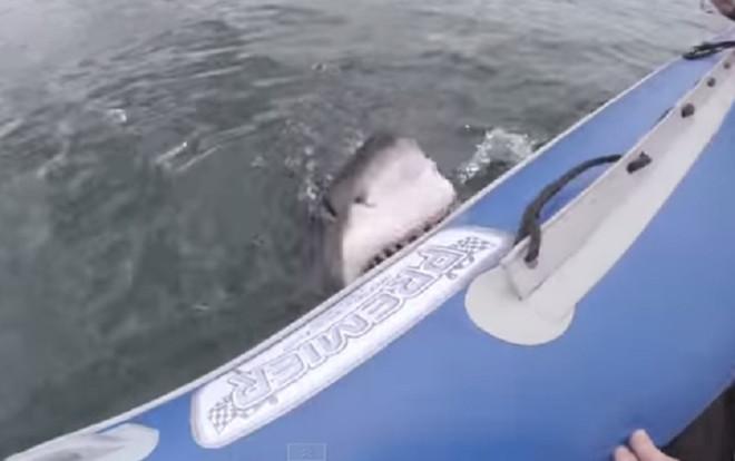 shark bites boat