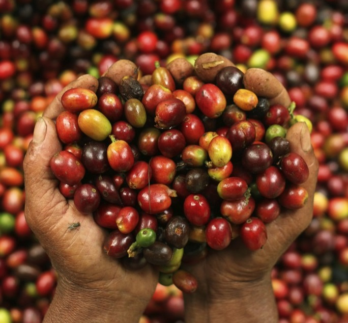 Producers of fair trade coffee are often paid below market rate.REUTERS/Yusuf Ahmad