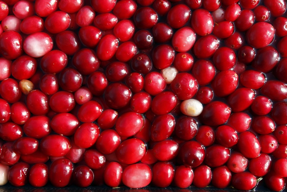 Roughly 13 million cranberries fill a 4,273 square meter,