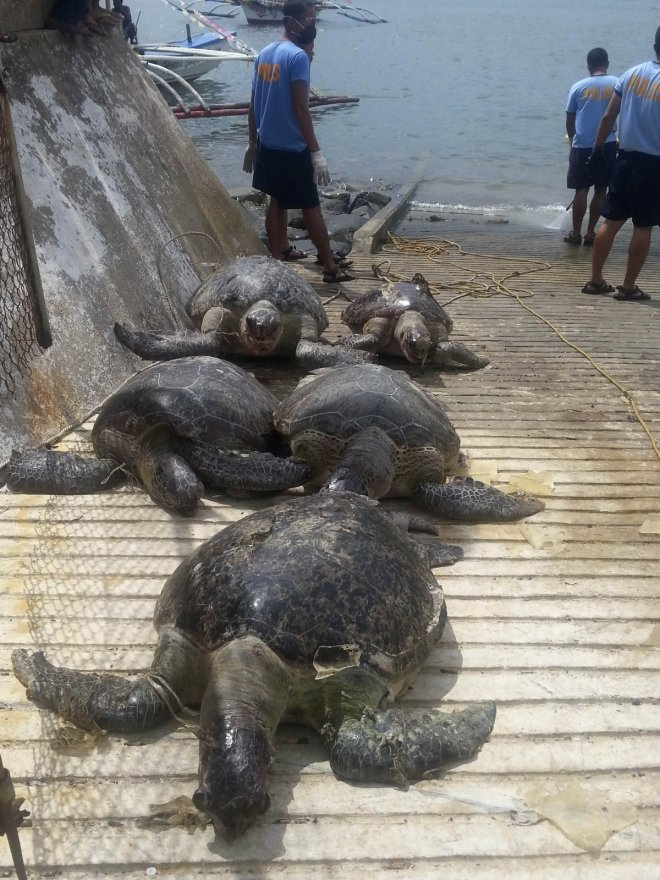 Chinese poaching turtles philippines fishermen