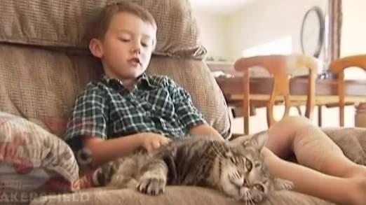 Tara the Cat