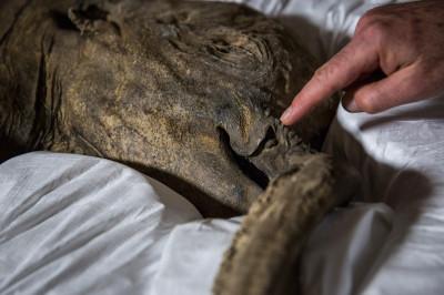 mammoth trunk
