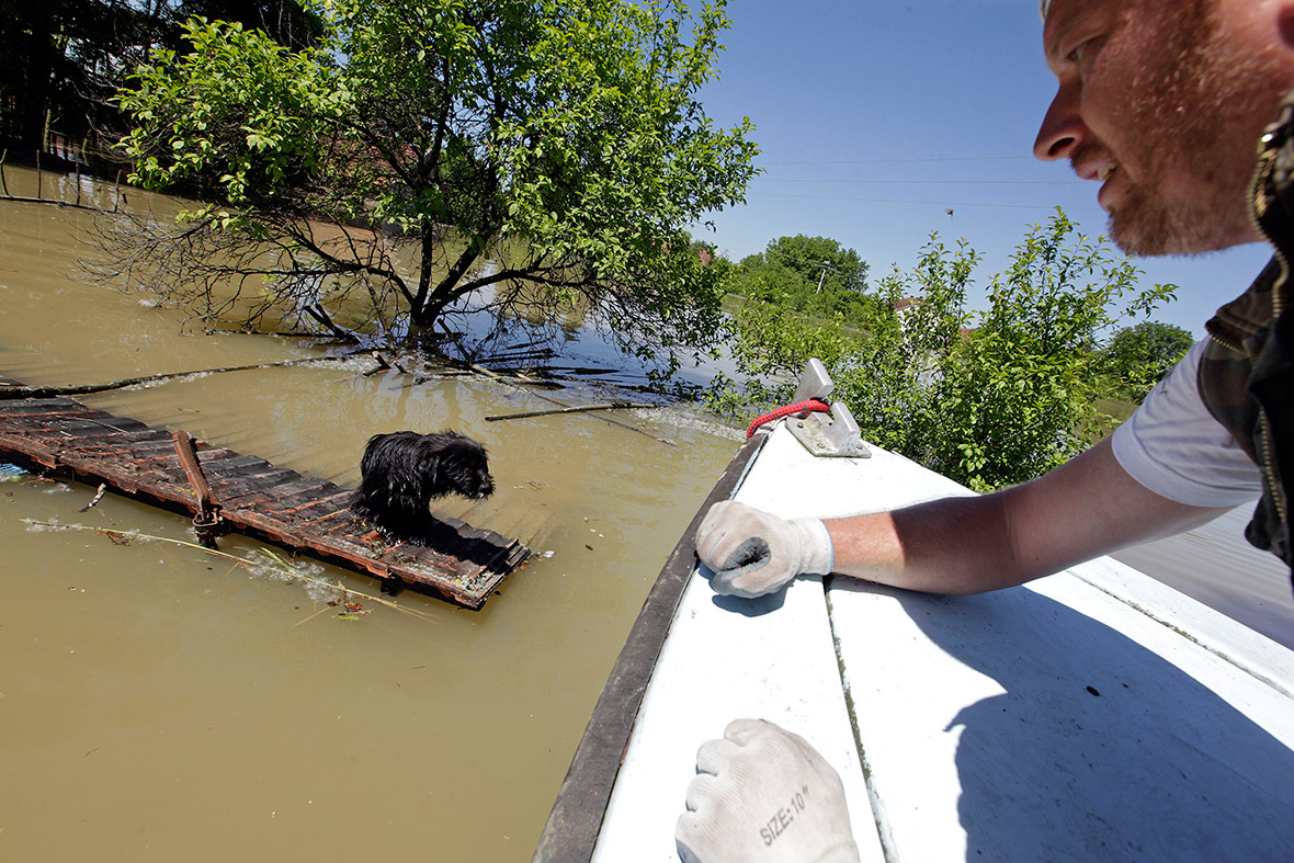 Balkans Floods Landmines Unearthed Animals Stranded
