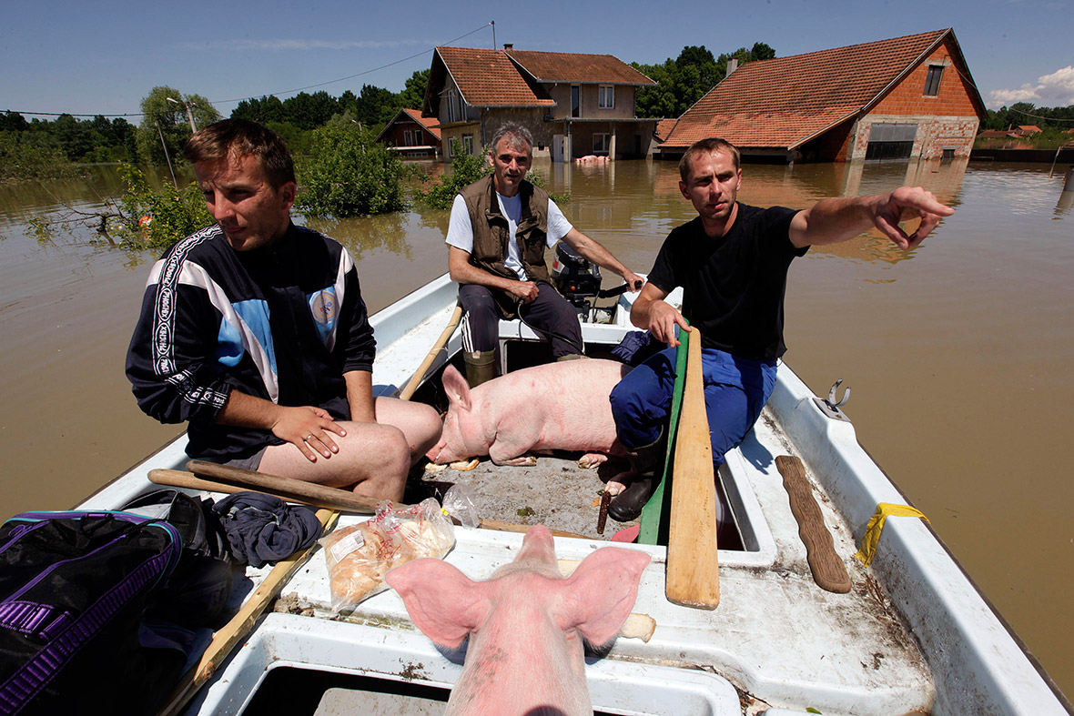 basnia pigs boat