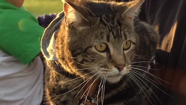 Tara the Hero Cat Makes Ceremonial Baseball Pitch