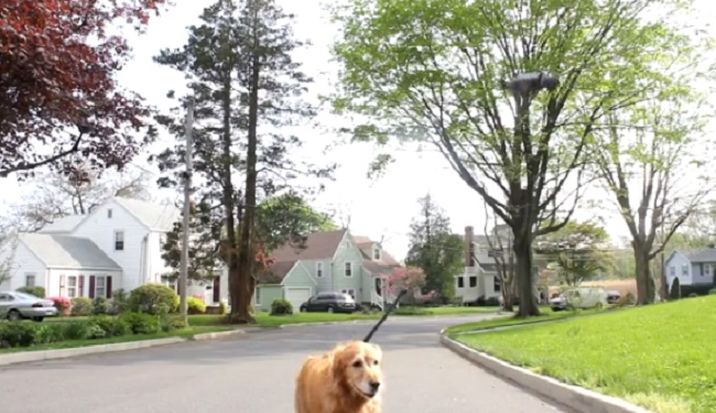 Dog walking with Drones
