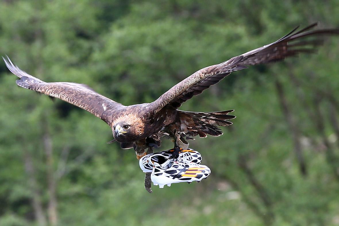 eagle football
