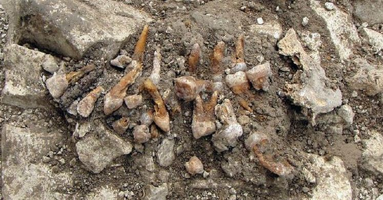 Western Europe's Earliest Dental Implant Found in France