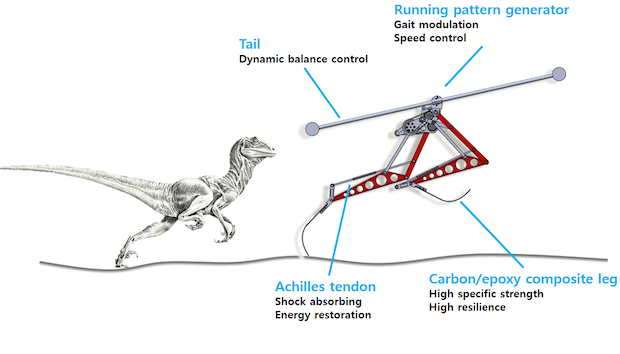 The KAIST Raptor uses a spinning rod as a tail: it helps the robot keep its balance while in motion