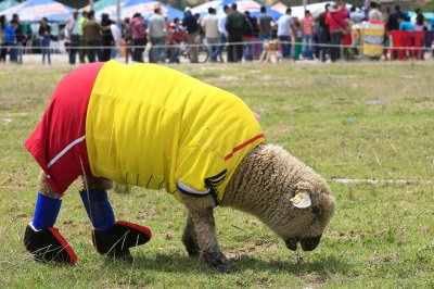 world cup sheep