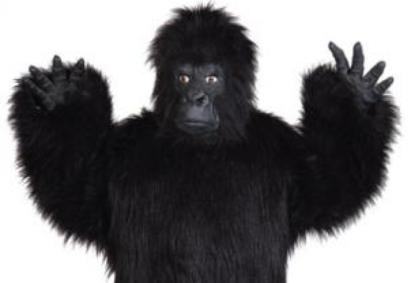 Hands up: Zoo in Tenerife shot a man wearing a gorilla suit which it thought was an escaped animal