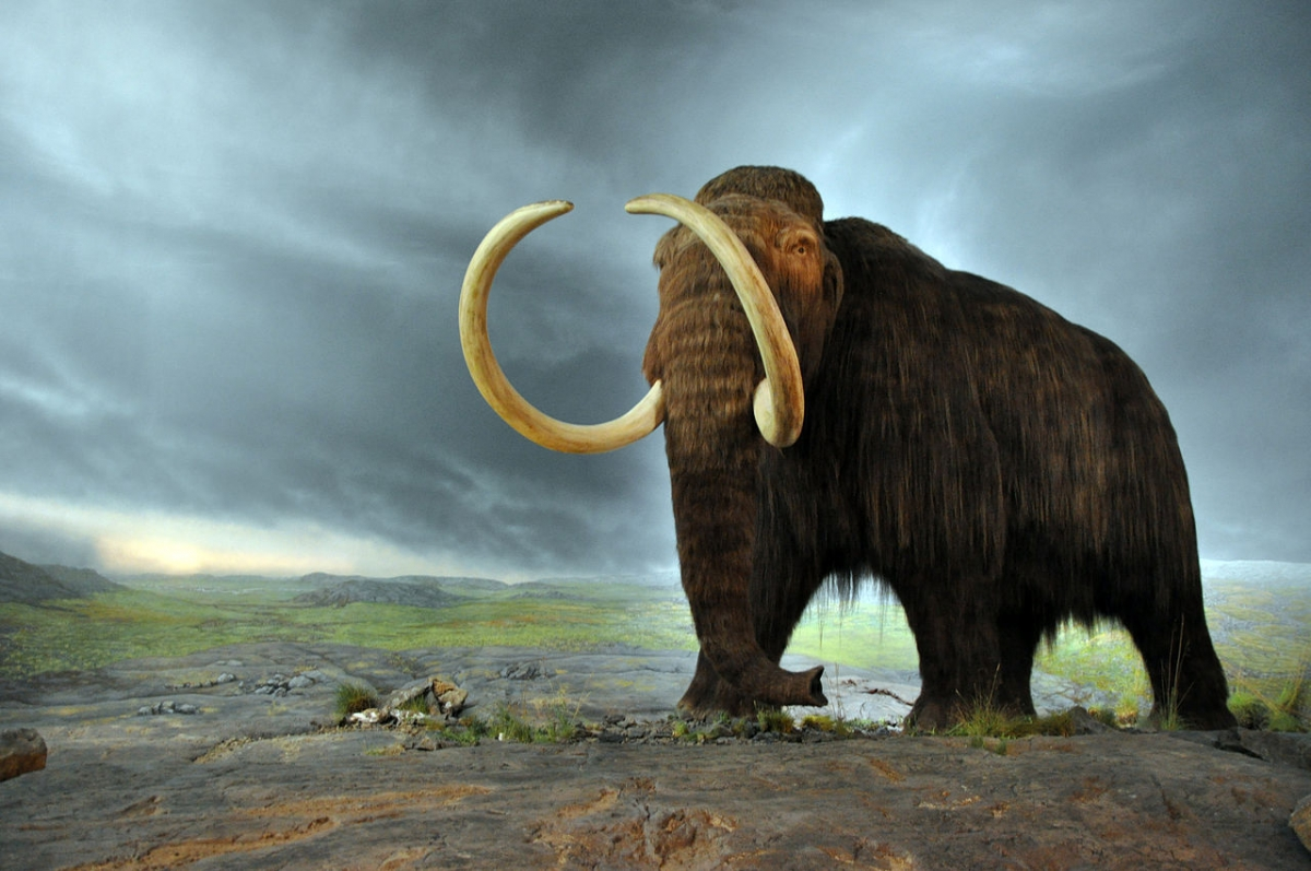 Scientists: Reintroducing Extinct Species is a Terrible Idea