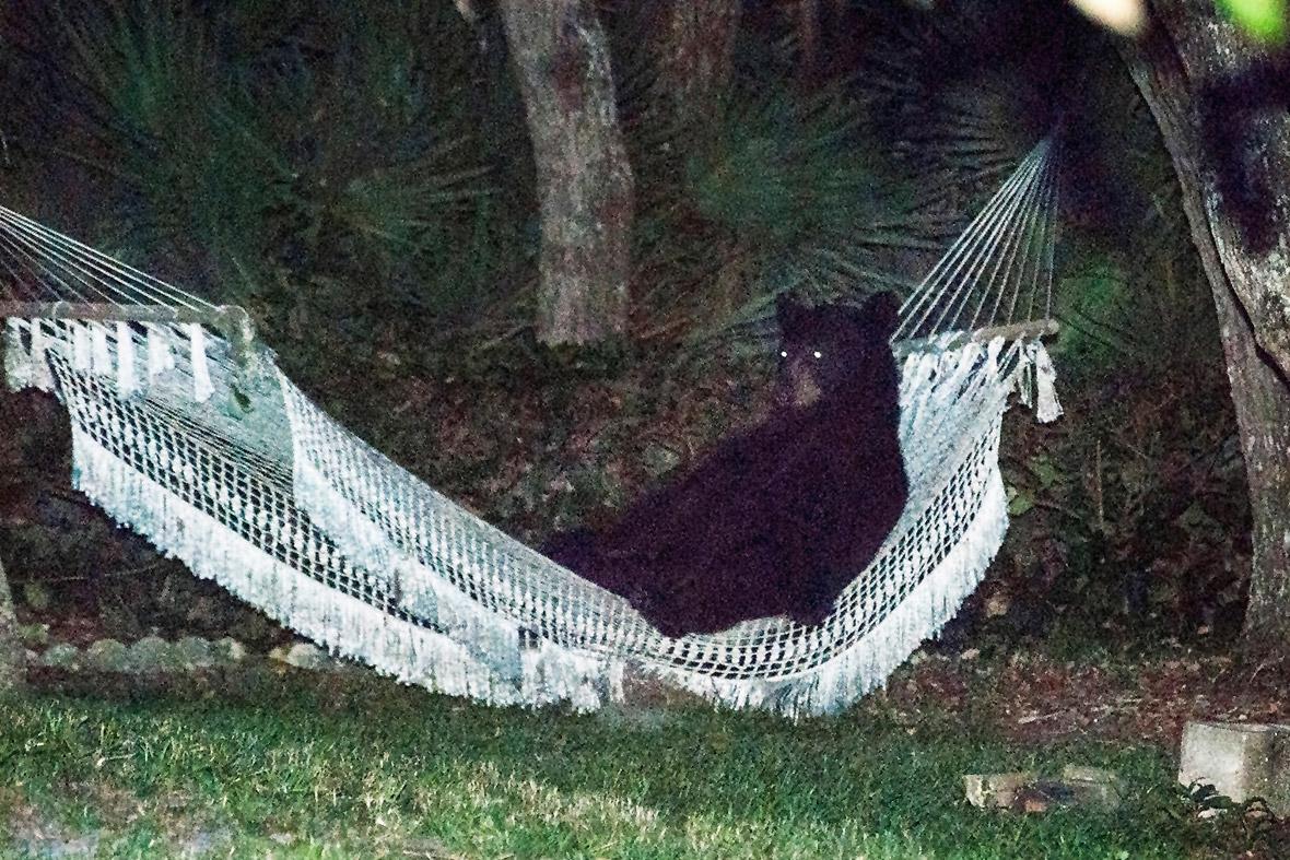bear hammock