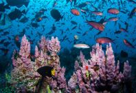 World Oceans Day aims to preserve the world\'s seas for present and the future generations.