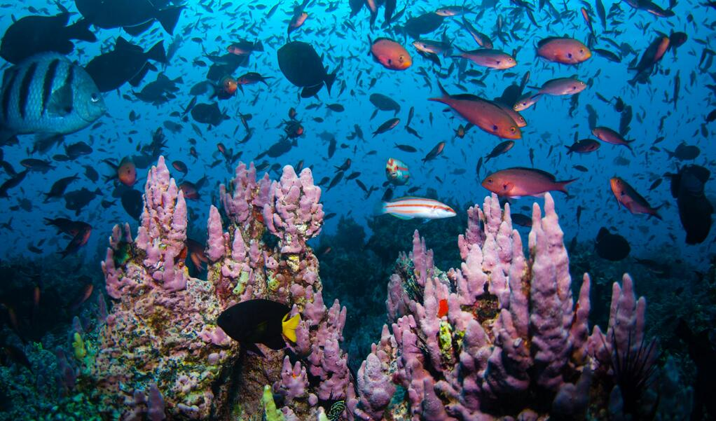 World Oceans Day aims to preserve the world's seas for present and the future generations.